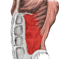 Anatomy: Atlas of Muscles APK for Bluestacks
