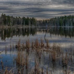 Dead trees in the lake by Dan Westtorp - Nature Up Close Water