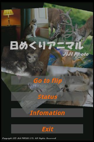 JIJI Photo 日めくりアニマル