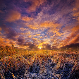 Morning Dance by Phil Koch - Landscapes Prairies, Meadows & Fields ( natural light, vertical, wisconsin, ray, yellow, leaves, phil koch, landscape, photography, sun, storm chaser, sky, tree, nature, autumn, weather, horizons, flower, office, clouds, orange, park, green, twilight, agriculture, horizon, scenic, morning, portrait, shadows, wild flowers, field, dawn, red, blue, fog, serene, sunset, peace, fall, meadow, summer, trees, beam, sunrise, landscapes, floral, mist )