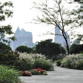 New York Cityscape by Jane Singer - City,  Street & Park  Skylines