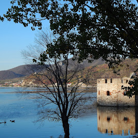 Golubac fortress by Irena Čučković - Buildings & Architecture Public & Historical ( tower, tree, fortress, autumn, fall, danube, river )