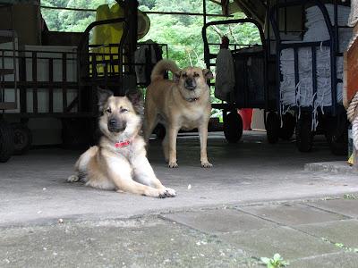 Dog Friendly Accomodation Peterborough Uk