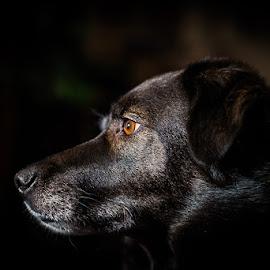 Nemi by Tor Boine - Animals - Dogs Portraits ( europe, karasjok, nemi, hund, norge, europa, finnmark, dog, dyr, animal, norway,  )