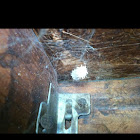 Blackwidow nest!
