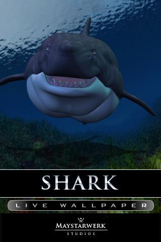鯊魚生活壁紙