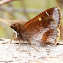 Doubleday's Skipper