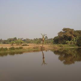 Rural Bengal by Raisa Mukherjee - Landscapes Prairies, Meadows & Fields ( water, field, india, landscape, rural )