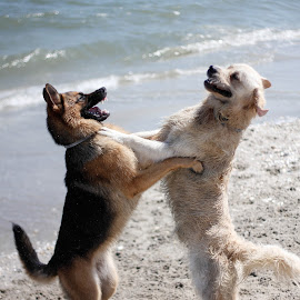 Let's play! by Alina Dragan - Animals - Dogs Playing ( playing, animals, dogs, friendship, seaside )