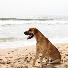 Dog on the Beach by Sristi Yadav - Novices Only Pets ( sand, pet, beach, dog, animal )