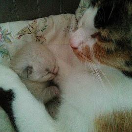 Awwww by Lyz Amer - Animals - Cats Portraits ( kitten, cat )