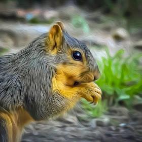 Squirrel oil NAL.jpg