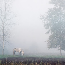 one morning by Vladimir Firsov - Landscapes Prairies, Meadows & Fields ( russian nature, horse, nice, forest, morning, prairie, mist,  )