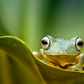 Hello by Dikky Oesin - Animals Amphibians