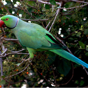 by Samrat Sam - Animals Birds ( bharatpur )