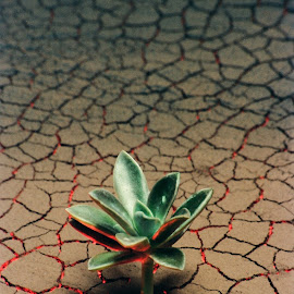 SURVIVOR... by Raj Mohite - Artistic Objects Still Life ( red, tree, crack, bottom, bush, light,  )