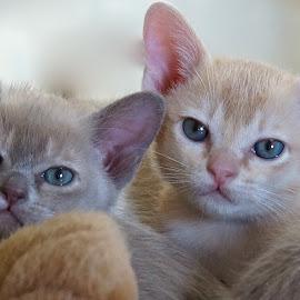 Ninive and Merlin by Krista Nurmi - Animals - Cats Kittens (  )