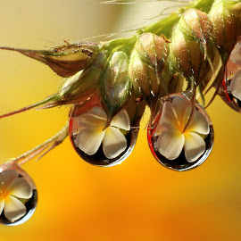 Foursome by Chandra Kushartanto - Nature Up Close Natural Waterdrops