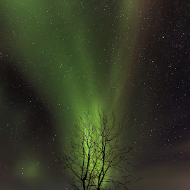 Aurora Tree by Arnar Sigurbjörnsson - Nature Up Close Trees & Bushes ( green, aurora borealis, aurora, norðurljós, frozen, green light, iceland, tree, cold, stars, snow, ísland, night, northen lights )