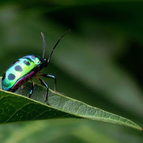 A Green World by Protim Banerjee - Animals Insects & Spiders ( nature, green, nature up close, insect )