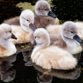 by Nancie Rowan - Animals Birds