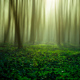 by Dragana Trajkovic - Nature Up Close Trees & Bushes (  )