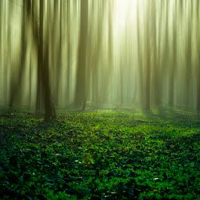 by Dragana Trajkovic - Nature Up Close Trees & Bushes ( nature, serbia, belgrade, forest )