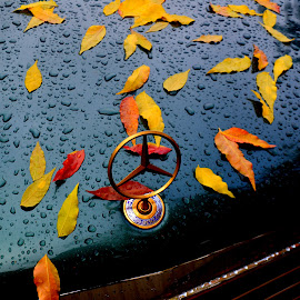 Classy Leaves by Brian Blood - Nature Up Close Leaves & Grasses ( car, autumn, leaves, hood, mercedes,  )