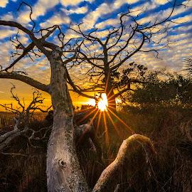 Florida Sun Rays by Jason Green - Landscapes Sunsets & Sunrises ( staugustine, saint augustine, sunset, florida, 904 )