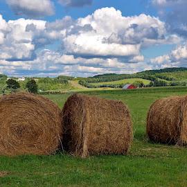 Bill's Farm Market by Dave Harrell - Landscapes Prairies, Meadows & Fields ( farm, hay, haybales, country, fields,  )