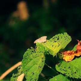 BeautySpot by Arnab Sarkar - Novices Only Macro ( canon, butterfly, 1200d, macro photography, green, parmadan, forest, leaf, canon eos, rural, dslr, natural beauty, macro, bangladesh, nature, village, arlumination, greenery, nature up close, focus, india, woodland, border, natural )