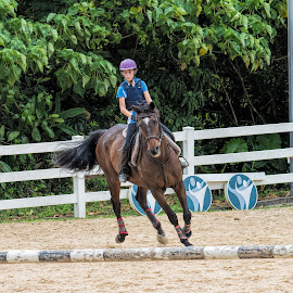 Approach by Vibeke Friis - Sports & Fitness Other Sports ( rider, horse, jump,  )
