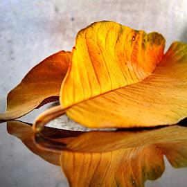Dried leaves and reflection by Janette Ho - Instagram & Mobile iPhone