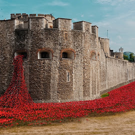POPPY by Alan Dash - Buildings & Architecture Other Exteriors ( uk, tower, thames, poppy, bridge, day )