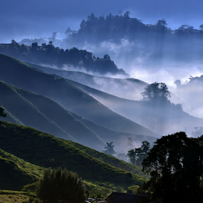 Misty Morning   by Jimmy Chiau - Landscapes Mountains & Hills ( hills, mountains, cameron, malaysia, tea, morning, landscape, misty )