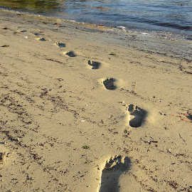 Footprints on Path of life by Barb Rees - Landscapes Beaches ( footprints, beach, path of life, path, nature, landscape )