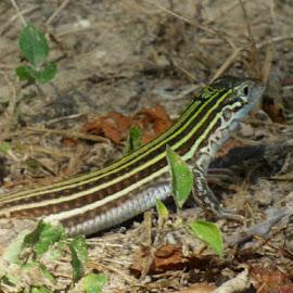 by Nita Andrews - Animals Reptiles