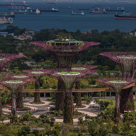 Flowering Bay by Sean Heatley - City,  Street & Park  City Parks ( towers, boats, trees, gardens by the bay, ocean, singapore )