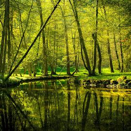 by Jadran Korać - Landscapes Forests