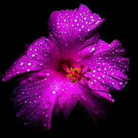 Wet Purple by Farid WN - Instagram & Mobile Android ( android, purple, dew, flower, mobile )