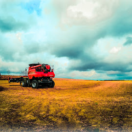 Harvest Season by Tasha Ragel Dial - Transportation Other ( farm, combine, harvest, farming, case ih )