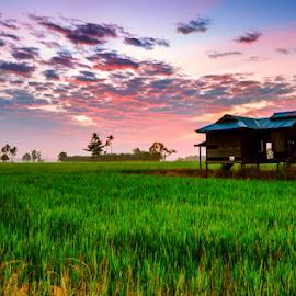 Rays of Light by Syazwan Shahril - Landscapes Prairies, Meadows & Fields ( sky, paddy field, grass, paddy, cloud, malaysia, rol, rays of light, sunrise, perak )