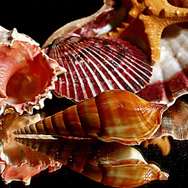 by Karen McKenzie McAdoo - Nature Up Close Other Natural Objects