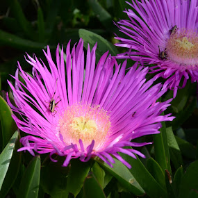 WildFlowers by Kristian Stanković - Flowers Flowers in the Wild ( wildflowers, wild, sunbath, crickets, flower )