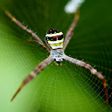 St Andrew's Cross Spider