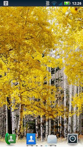 秋葉動態壁紙