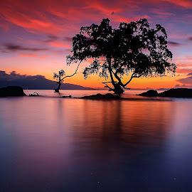 sendiri di balik senja by Dody Alaydrus - Landscapes Sunsets & Sunrises (  )