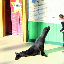 seal by Kaushik Pichumani - Animals Sea Creatures
