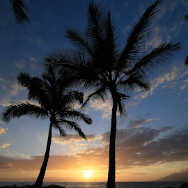 Sunset in Maui by Andy Schwanke - Landscapes Sunsets & Sunrises ( maui, sunset, palm trees, ocean, paradise, hawaii )