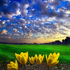 What Kind of World do You Want by Phil Koch - Landscapes Prairies, Meadows & Fields ( vertical, photograph, farmland, yellow, leaves, storm, love, sky, nature, tree, autumn, shadow, snow, flower, orange, wind, twilight, agriculture, horizon, portrait, dawn, winter, environment, season, national geographic, serene, trees, floral, inspirational, wisconsin, natural light, phil koch, spring, sun, photography, farm, ice, horizons, rain, inspired, office, clouds, park, green, scenic, morning, shadows, wild flowers, field, red, blue, sunset, fall, peace, meadow, summer, sunrise, earth, landscapes )